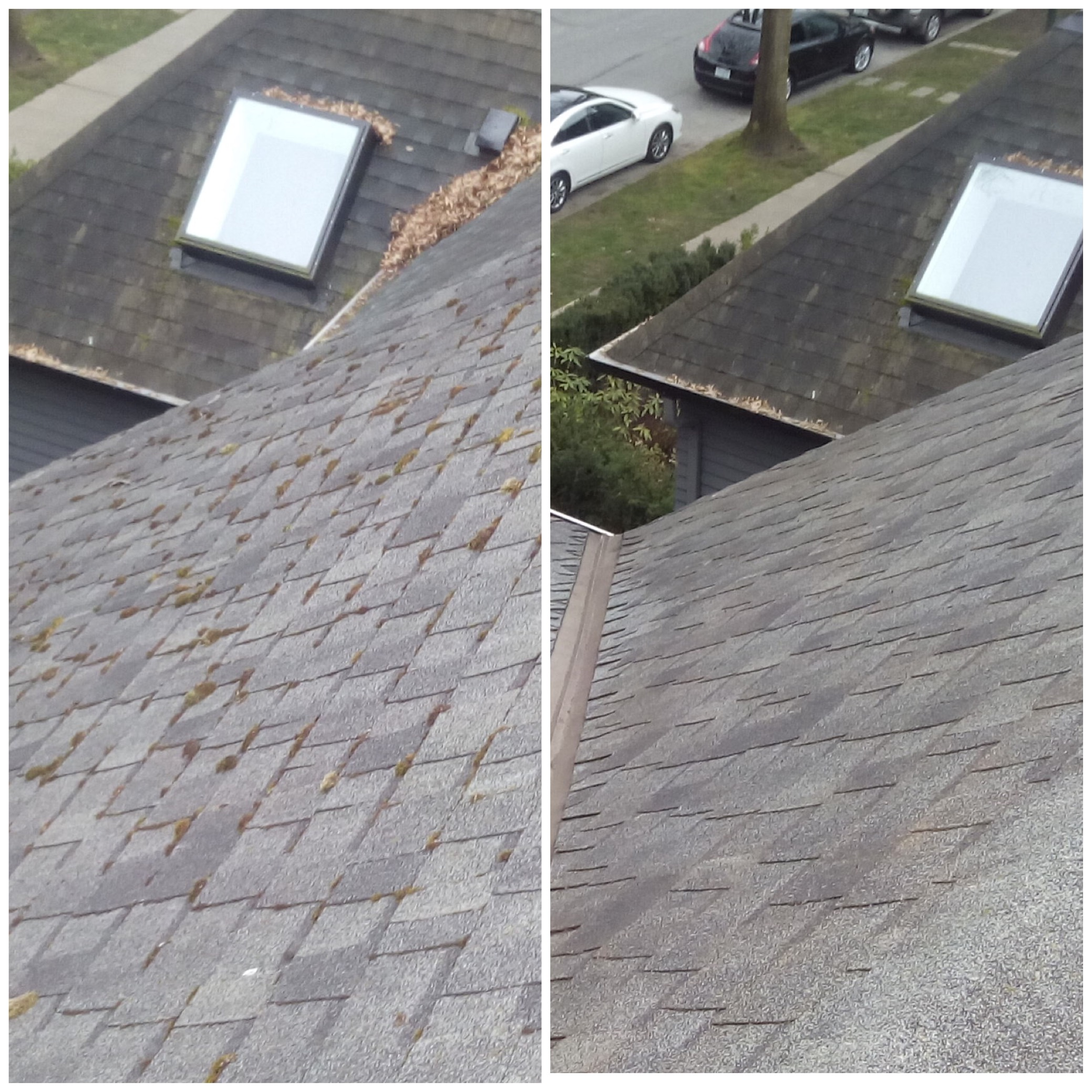 Vancouver Roof Cleaning Amp Moss Removal 24 7 Handyman
