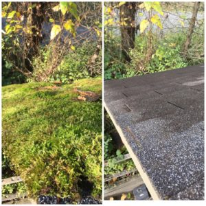 roof moss removal in Vancouver