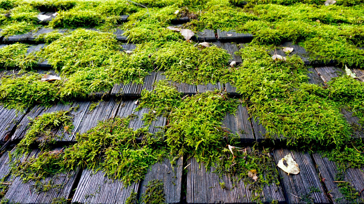 Why should you clean moss off your roof on your Vancouver home?