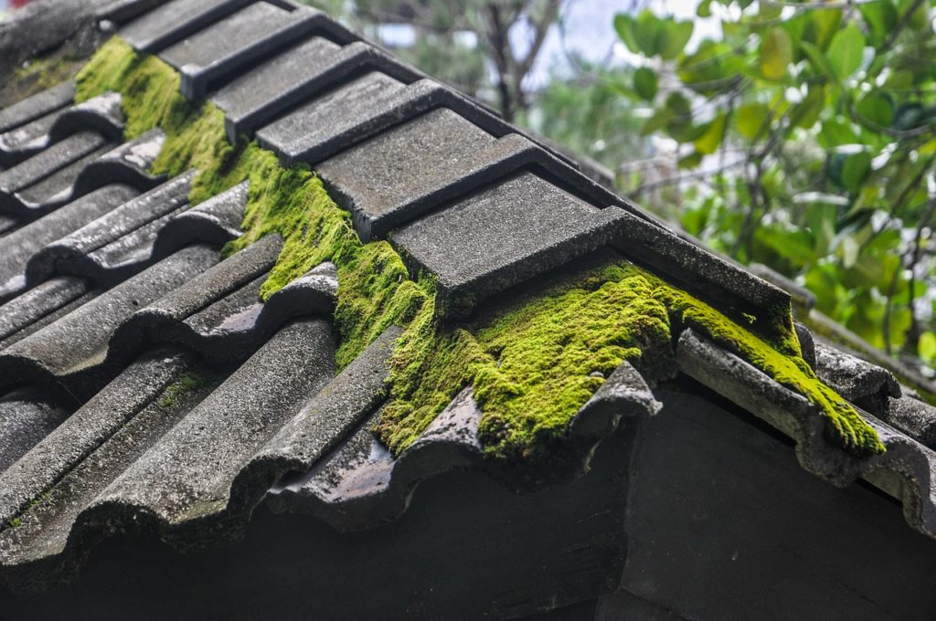 How to Prevent Moss from Growing on Your Roof?