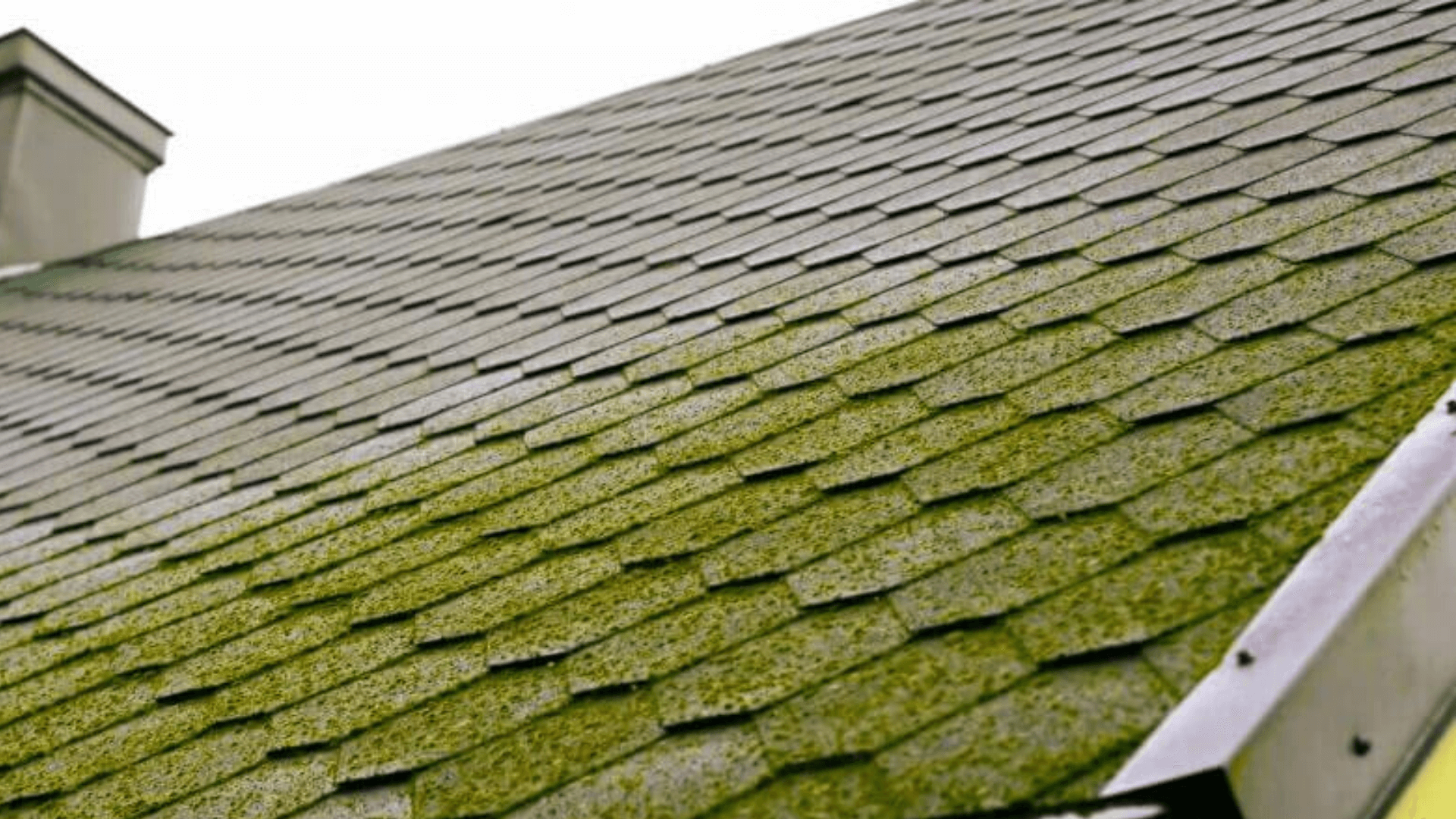 What is the Best Way to Remove Moss From Your Home Roof?